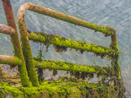Detail of a metal fence with moss that is introduced into the water Banco de Imagens
