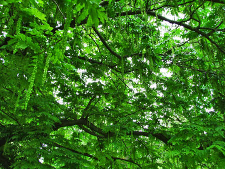 Green tree branches, St. Gallen 스톡 콘텐츠