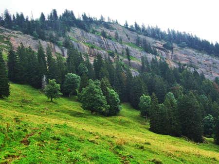 Picturesque hills, forests and pastures in Ostschweiz - Canton of Appenzell Ausserrhoden, Switzerland (Schweiz)