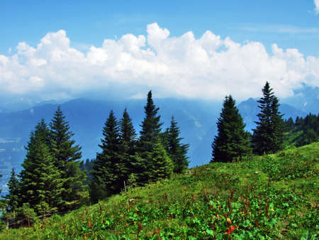 Trees and evergreen forests on the slopes between the Alvier mountain and Seeztal valley - Canton of St. Gallen, Switzerland