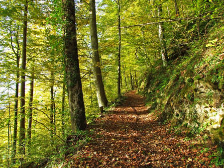Hiking and walking trails on the slopes of the Alpstein mountain massif and in the Rhine river valley (Rheintal) - Canton of St. Gallen (SG), Switzerland