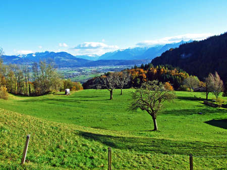 Alpine pastures and grasslands on the slopes of the Alpstein mountain massif and in the Rhine river valley (Rheintal), Oberriet SG - Canton of St. Gallen, Switzerland