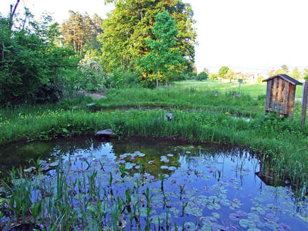 An artificial pond with a dam and mini marshes on the Grabserbach stream, Grabs - Canton of St. Gallen, Switzerland