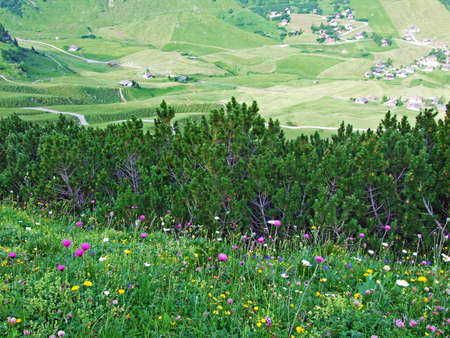 Alpine pastures and meadows in the Malbuntal valley and in the Liechtenstein Alps mountain range - Malbun, Liechtenstein