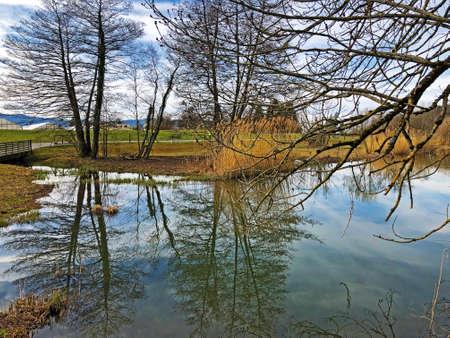 Small lake Schübelweiher (Schubelweiher or Schuebelweiher) or Pond Schübelweiher, Küsnacht am Zürichsee (Kusnacht am Zurichsee oder Kuesnacht am Zuerichsee) - Canton of Zürich, Switzerland Imagens