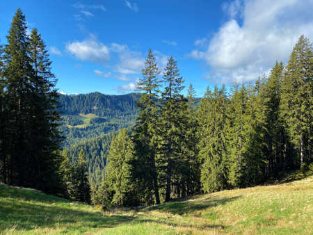 Evergreen forest or coniferous trees on the slopes of the Pilatus massif and in the alpine valleys below the mountain peaks, Alpnach - Canton of Obwalden, Switzerland (Kanton Obwald, Schweiz)