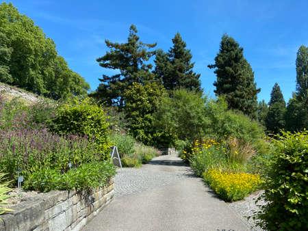 Landscape of the Herbaceous Garden or Staudengarten (Flower Island Mainau on the Lake Constance or Die Blumeninsel im Bodensee) - Constance, Germany / Konstanz, Deutschland