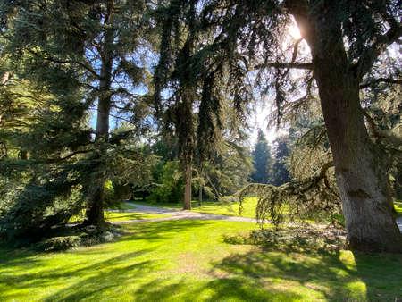 Arboretum (Tree Collection or Baumsammlung), (Flower Island Mainau on the Lake Constance or Die Blumeninsel im Bodensee) - Constance, Germany / Konstanz, Deutschland
