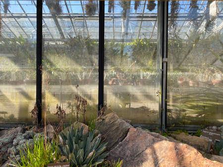 Tropical greenhouse (Seere tropicale), Conservatory and Botanical Garden of the City of Geneva (Conservatoire et Jardin botaniques de la Ville de Genève) - Switzerland (Suisse)