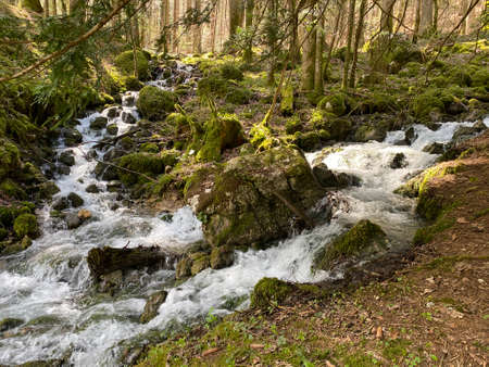 Torrent tributaries with karst springs in the area of the source of the river Orba and in its canyon, Vallorbe - Canton of Vaud, Switzerland (Kanton Waadt, Schweiz)