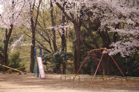 A spring park  Stock Photo