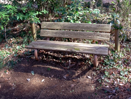 The stale bench in a wood  Stock Photo