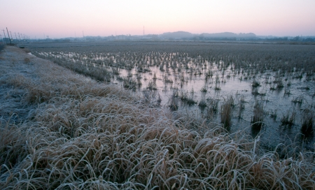 The paddy field of winter  Stock Photo