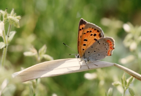 The butterfly of early spring
