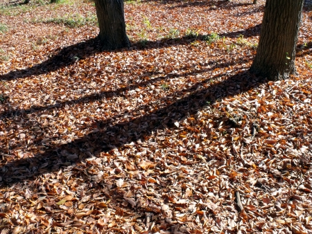 Sunbeams shining through branches of trees and fallen leaves  Stock Photo