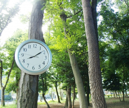 The clock in a wood  Stock Photo