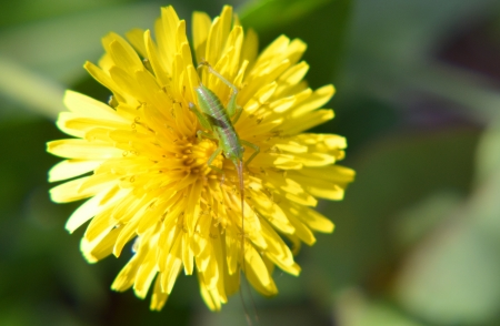 Flowers and grasshopper