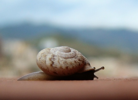 Little snail with blurred background