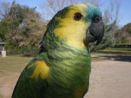 beack: cute parrot