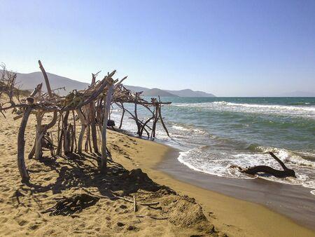 driftwood on a sandy Beach in Tuscany, Italy Stock Photo