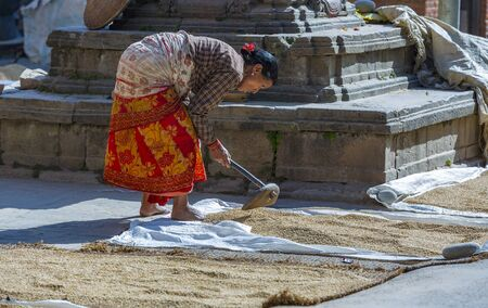 Kathmandu,Nepal: November 02,2017:asian senior women is drying rice in the sun