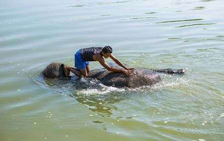Chitwan, Nepal: November 06,2017:asian man is washing an Elefant in a river in Nepal Editöryel