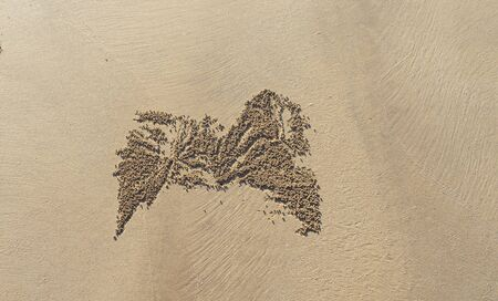 close up of  a crab trace in sand