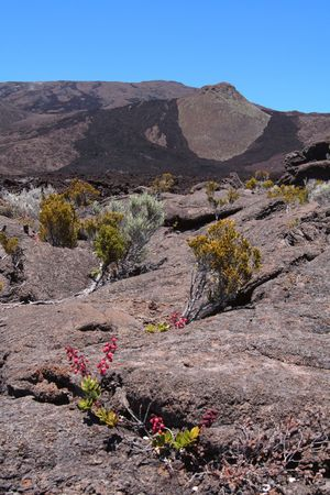 Piton de la Fournaise volcano, on the french Reunion island, with the last lava flow and some flowers