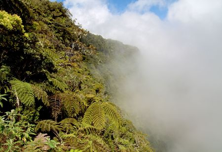 Cloud forest and tree ferns on french Reunion island mountains