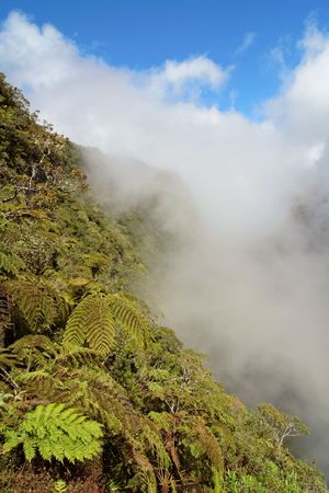 Cloudy forest and tree ferns on french Reunion island mountains