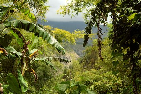 A view throughout a deep jungle, Reunion Island