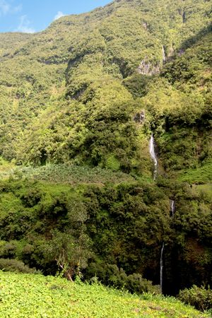 Waterfall and bananas culture, French Reunion Island Stock Photo