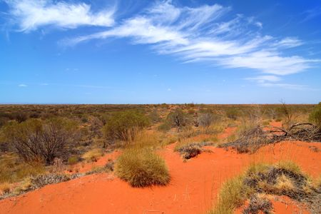 Bush in the Australian Outback, with a blue sky