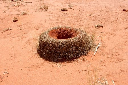 Huge Anthill in the australian red desert Stock Photo