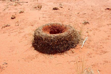 Huge Anthill in the australian red desert Stock Photo