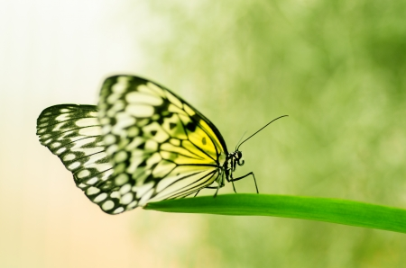 yellow butterfly on a blade of grass