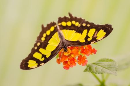 Schmetterling auf einer Blume Lizenzfreie Bilder - 23364048