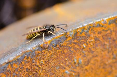 unwound: wasp