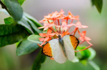 Große orange Spitze