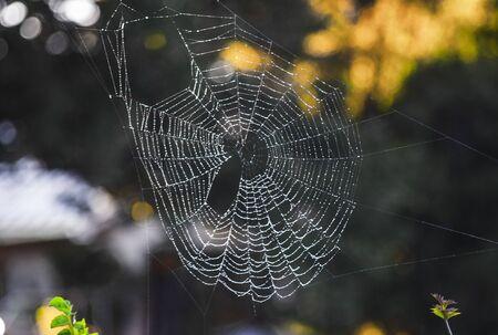 Full circular spider web, with misty background, glistening in morning light Stockfoto