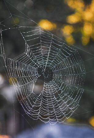 Full circular spider web, with misty background, glistening in morning light in portrait format