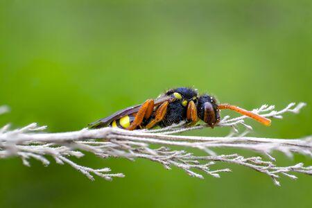 big wasp in my soison garden