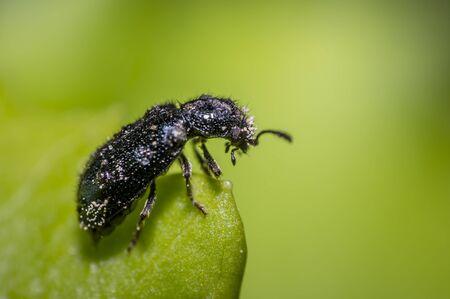 Beetle on green leaf in the season garden