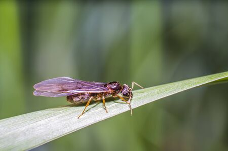 little fly ant on blade of grass