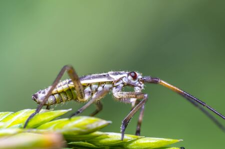 small beetle on green grass in fresh season nature