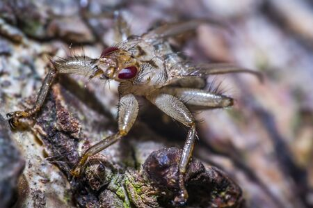 small louse fly on a tree in nature forest