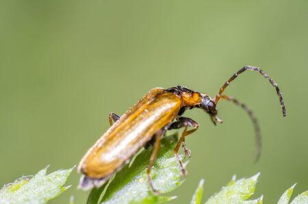 little beetle in the green nature season garden Stock Photo