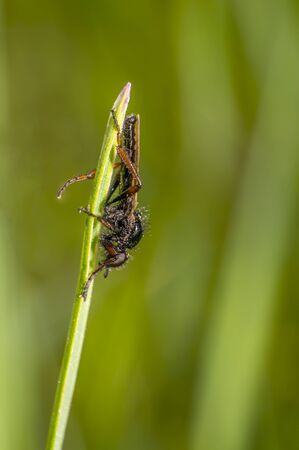 march fly on a herb in the summer season