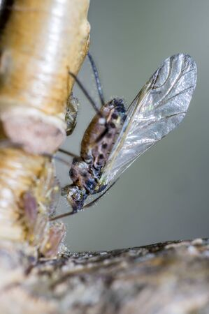 small aphids on an old tree