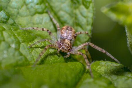tiny spider on green leaf in perfect nature Stock Photo